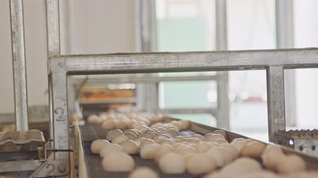 egg sorting : Eggs on a conveyor belt in a large chicken farm