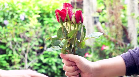 gives : Hand of man giving a red rose to woman.Valentine's day gift concept Stock Footage