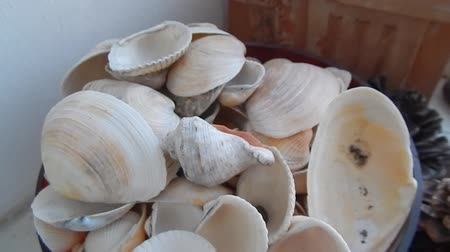 ракушки : Movement of seashells composition on the table