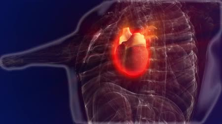 puls : Human anatomy. Heart on a dark background. looped animation Dostupné videozáznamy