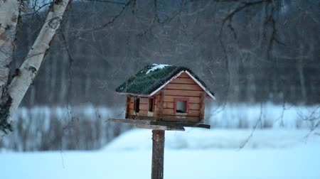 самодельный : small birds feeding in homemade bird house in winter Стоковые видеозаписи