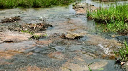 natural landscape : Movement of water in small stream. Relaxing water background. Stock Footage