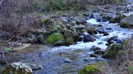 ariege : Pyrenean stream in forest,  Ariege in south of France