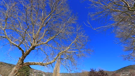anjiyospermler : Traveling from a tree in Pyrenean landscape in winter, Aude in south of France Stok Video