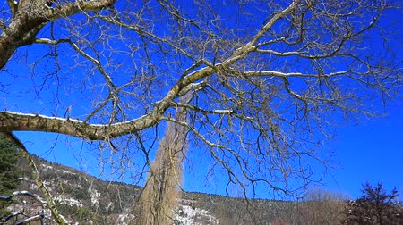 angiospermas : Traveling from a tree in Pyrenean landscape in winter, Aude in south of France Stock Footage