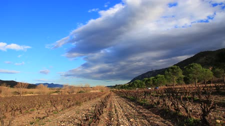 алкоголь : Vineyard in Fenouilledes, Pyrenees orientales in south of France Стоковые видеозаписи