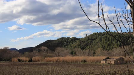 roussillon : mediterranean vineyard and isolated cabin in Pyrenees orientales, France