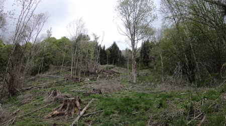 occitania : Deforestation of Pyrenean forest in Aude, Southern of France Stock Footage