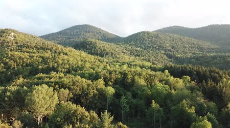 völgy : Aerial view of pyrenean forest filmed with drone, Aude in southern of France