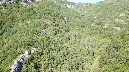 silvicultura : Aerial view of pyrenean forest filmed with drone, Aude in southern of France