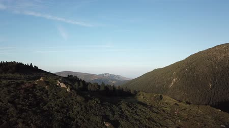 aerial view of wild pyrenean mountains and pine forest filmed with drone, Aude in the south of France Dostupné videozáznamy