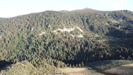 biodiverzitás : aerial view of wild pyrenean mountains and pine forest filmed with drone, Aude in the south of France Stock mozgókép