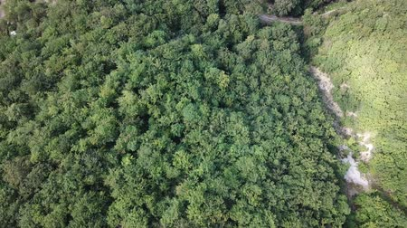 aerial view of green forest in Pyrenees, Aude in France Stock Footage