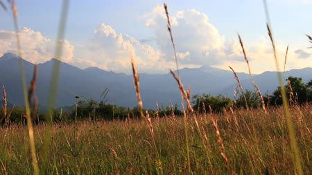ariege : meadow of flowers and grass in summer and pyrenean landscape at sunset, Occitanie in the south of France Stock Footage