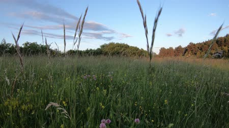 ariege : Pyrenean meadow at sunset in Aude, Languedoc in the southern of the france