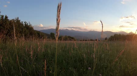 прерия : Pyrenean meadow at sunset in Aude, Languedoc in the southern of the france