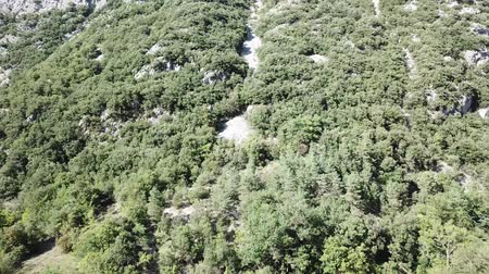 biodiverzitás : aerial view of mountain forest in Pyrenees, Aude in the south of France Stock mozgókép