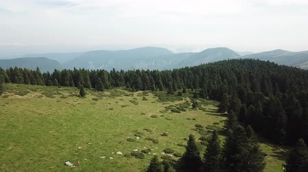 alba : aerial view of meadow and fir forest in Pyrenees filmed with a drone, Aude in the southern of France
