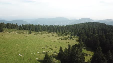 biodiversidade : aerial view of meadow and fir forest in Pyrenees filmed with a drone, Aude in the southern of France