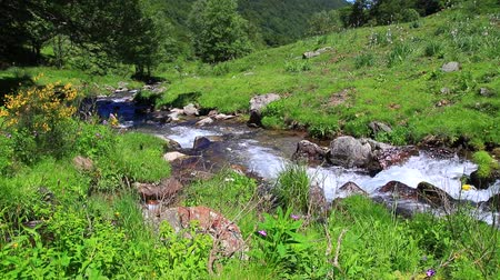 szegecs : mountain stream in the Pyrenees, Ariege in the south of France