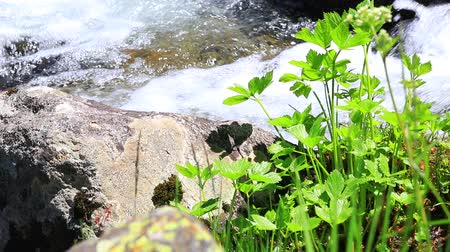 water flowing in a Pyrenean stream and green plant