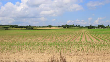 Time lapse of cultivated field in spring, Aude in the southern of France