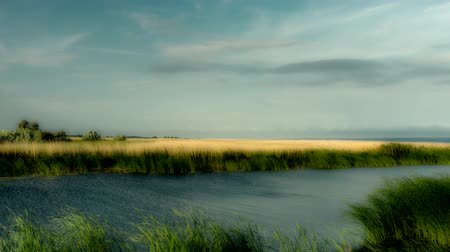nuvem : Polish landscape. Reeds in the wind. 4K timelapse.