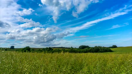 Rape field and blue sky with clouds moving.