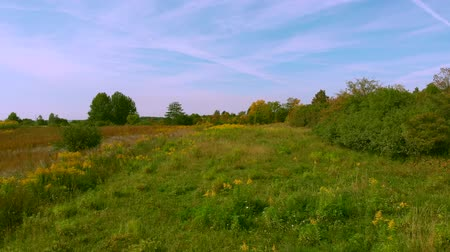 Autumnal wild meadow.