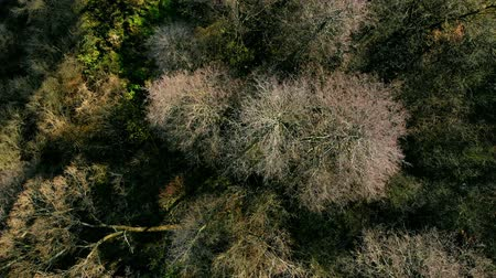 Autumn forest seen from above. Vídeos