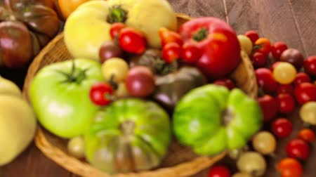 tomate cereja : Organic heirloom tomatoes from backyard farm. Stock Footage