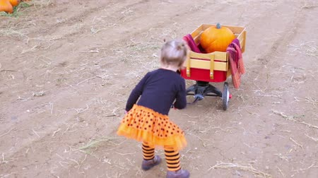 hallows : Toddler in Halloween costume playing at the pumpkin patch.