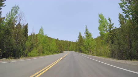 point of view pov : Car driving through alpine forest on Mount Evans-POV point of view. Stock Footage