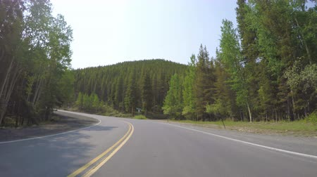 ér : Car driving through alpine forest on Mount Evans-POV point of view. Stock mozgókép