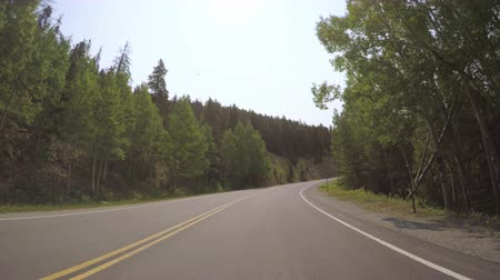 er : Car driving through alpine forest on Mount Evans-POV point of view. Stock Footage
