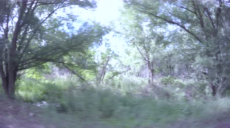 karpatské : Car driving through forest at Cherry Creek State Park.-POV point of view. Dostupné videozáznamy