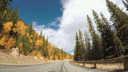 populus : POV point of view - Driving through alpine forest in the Autumn.