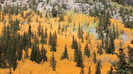 lombhullató : Aerial view of Rocky Mountains in the Autumn.
