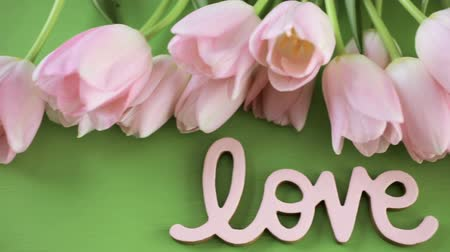 laleler : Light pink tulips on a green background. Stok Video