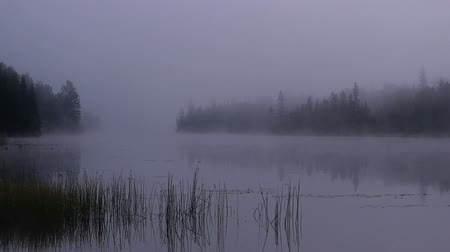 klidný : Foggy morning on a lake in Canada - Close view Dostupné videozáznamy