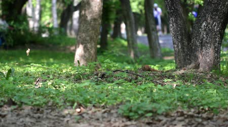 žalud : Cute squirrel in the park