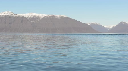 disko : A pack of seals swimming in arctic waters around Disko Island on Greenland Stock Footage