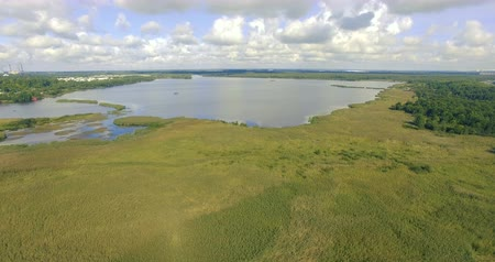 azalan : decreasing in altitude above the yellow reeds and bushes growing from the marsh lake in the summer sunny and bright midday. 4k Aerial footage.