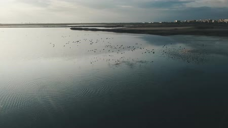 flamingi : Drone aerial of lakes biotope with pink flamingos and seaguls