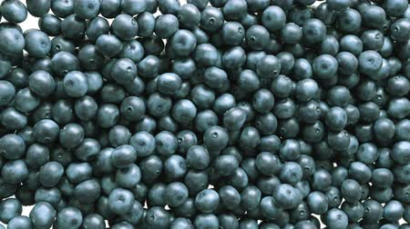 ягода : Blueberry slow motion flow and filling the screen. Alpha matte