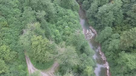 arborizado : Mountain river in a wooded gorge. Aerial view.