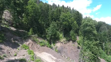 landslide : Coniferous forest on a mountain slope after a landslide. Aerial view.