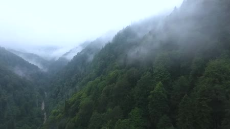 arborizado : Wild wooded mountains in the clouds. Aerial view.