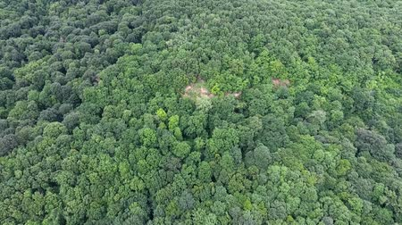 clareira : A thick oak forest. Aerial view.