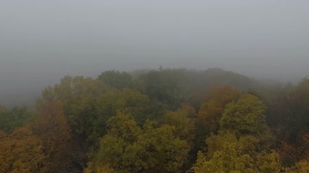 enchanted : Aerial view of the misty autumn forest. Drone footage. Stock Footage